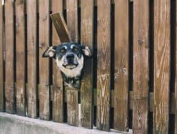 The Best Pet Fences